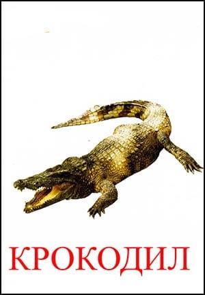 Крокодил картинка для детей