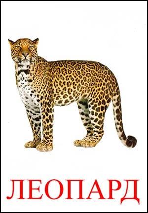 Леопард картинка для детей