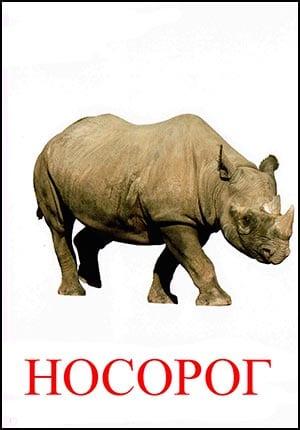 Носорог картинка для детей