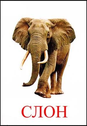 Слон картинка для детей