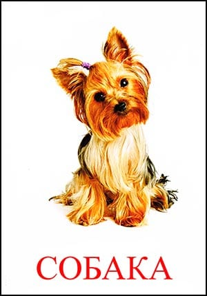 собака картинка для детей