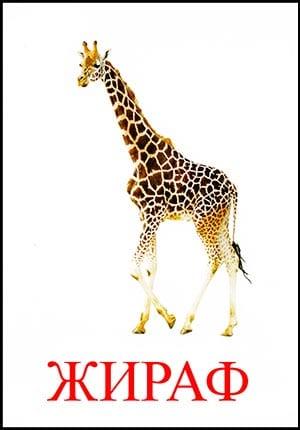 Жираф картинка для детей