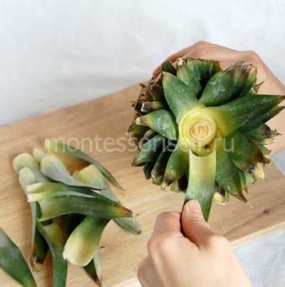 Отрываем верхние листья