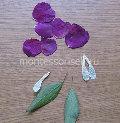 Лепестки и листья