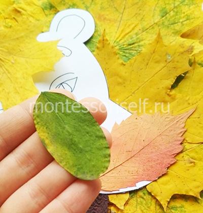 Зеленый овальный лист